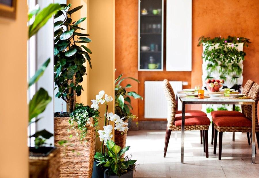 Использование растений и флористика в дизайне интерьеров